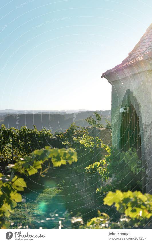 Weinland alt grün Blatt Landschaft Wand Mauer Feld ästhetisch Wachstum Hoffnung Dach Hügel Idylle Sehnsucht Dorf