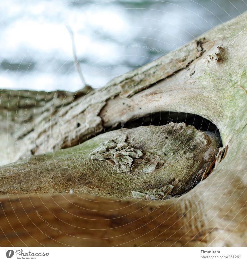 Naturwerk (Holz in Holz) blau Baum Pflanze Umwelt Tod Herbst grau Luft ästhetisch trist Vergänglichkeit trocken dehydrieren