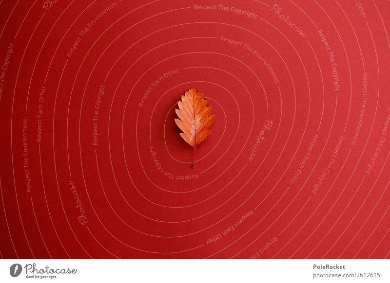 #A# Blatt-Design Kunst ästhetisch Herbst herbstlich Herbstlaub Herbstbeginn Herbstfärbung Abtrennung minimalistisch sehr wenige Farbfoto mehrfarbig