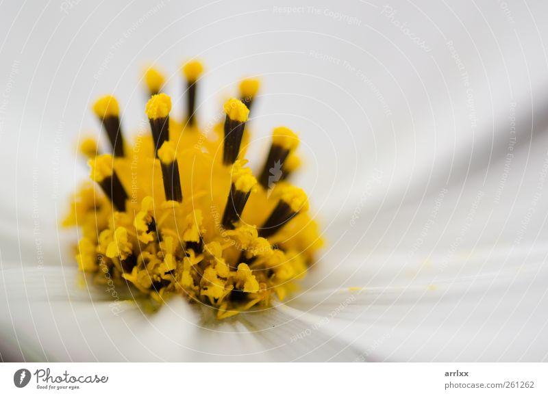 Natur weiß schön Pflanze Sommer Farbe gelb Herbst Garten Blüte hell ästhetisch Fröhlichkeit Dekoration & Verzierung weich Sauberkeit