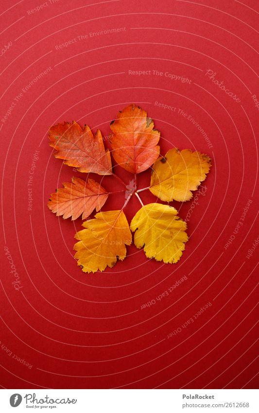 #A# Sechser im Laubo Kunst Kunstwerk ästhetisch Herbst herbstlich Herbstlaub Herbstfärbung Herbstbeginn Herbstwald Design Dekoration & Verzierung Symmetrie
