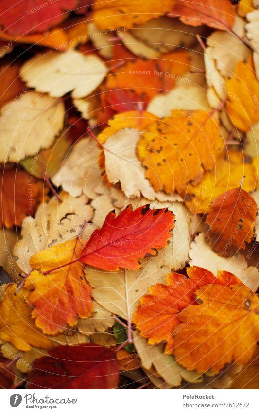 #A# Haufen Herbst Umwelt Natur ästhetisch Blatt herbstlich Herbstlaub Herbstfärbung Herbstbeginn Herbstwald Herbstwetter Herbstlandschaft Farbfoto