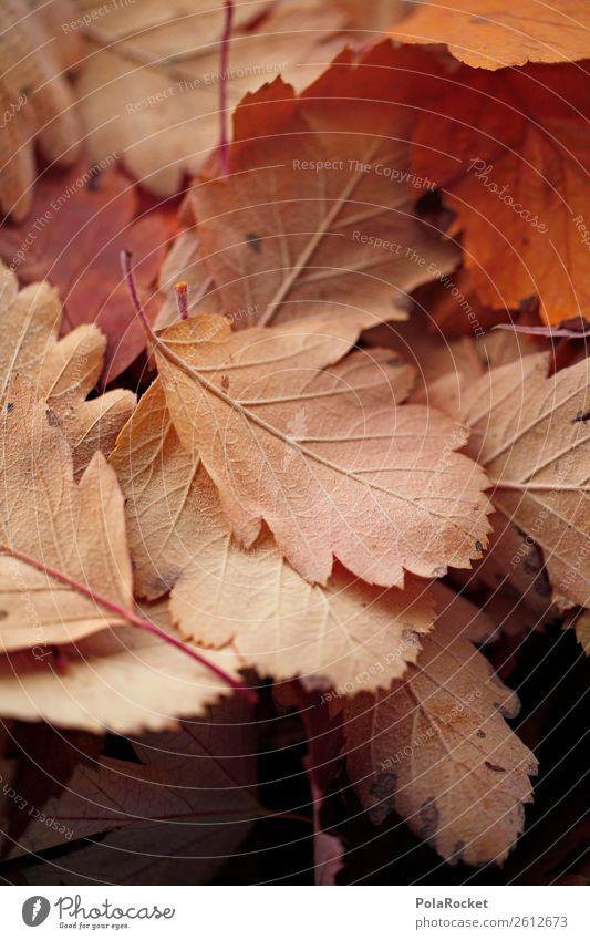 #A# Dezenter Herbst Natur ästhetisch Blatt herbstlich Herbstlaub Herbstfärbung Herbstbeginn Herbstwetter Jahreszeiten beige dezent Farbfoto Gedeckte Farben