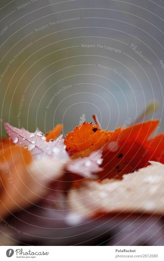 #A# Herbst in Nass Kunst ästhetisch herbstlich Herbstlaub Herbstfärbung Herbstbeginn Herbstwetter Herbstwind Blatt nass Farbfoto mehrfarbig Außenaufnahme
