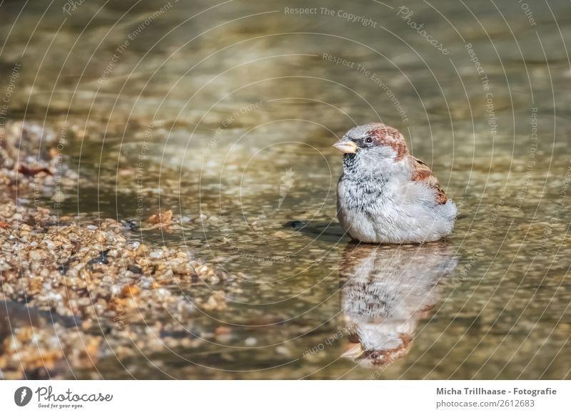 Spatz mit Spiegelbild Natur grün Erholung Tier Freude orange Schwimmen & Baden Vogel braun grau Wildtier sitzen Fröhlichkeit Lebensfreude Feder