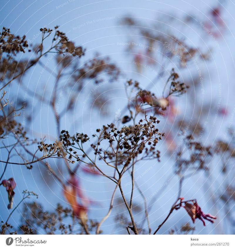 verblüht Pflanze Sträucher Blüte Wildpflanze Netzwerk alt Blühend dehydrieren authentisch einfach schön trocken blau braun gelb rot schwarz bescheiden Hoffnung