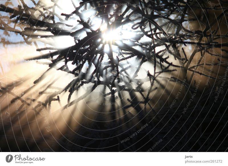 willkommen Umwelt Natur Landschaft Pflanze Sonne Sonnenaufgang Sonnenuntergang Winter Nebel Baum Wald glänzend leuchten hell natürlich Freiheit Hoffnung Idylle