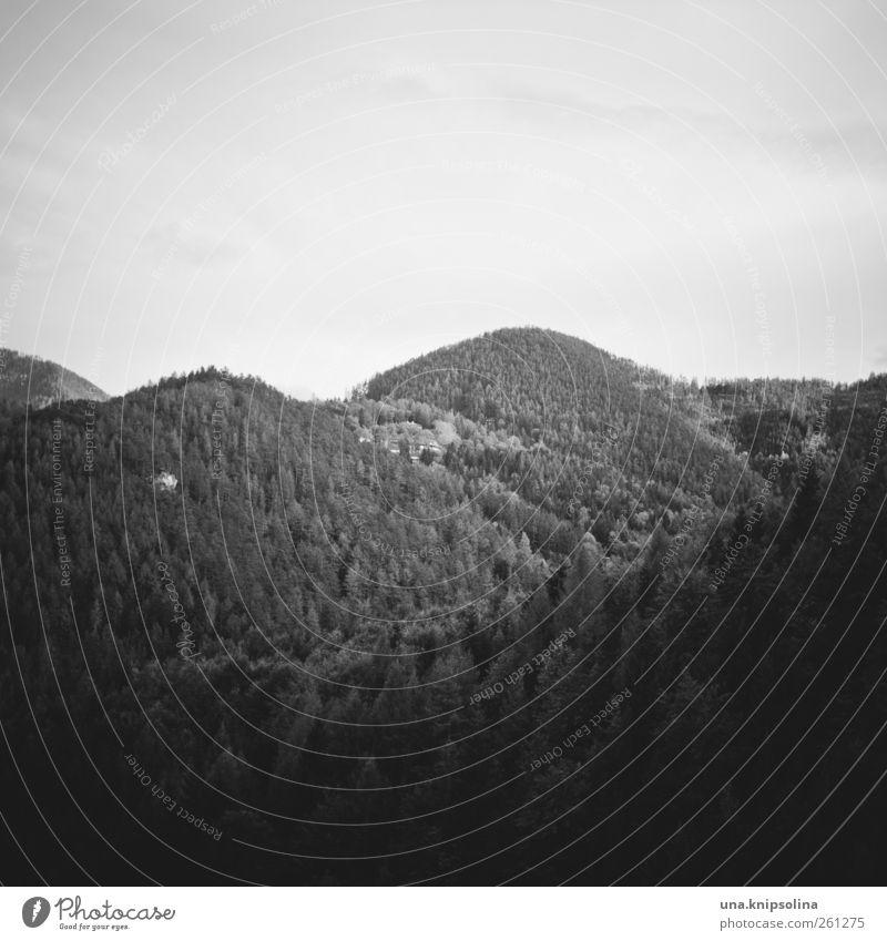 homeland Natur Ferien & Urlaub & Reisen Einsamkeit Wald Ferne Landschaft Berge u. Gebirge Freiheit natürlich groß frei Tourismus Alpen Unendlichkeit Österreich