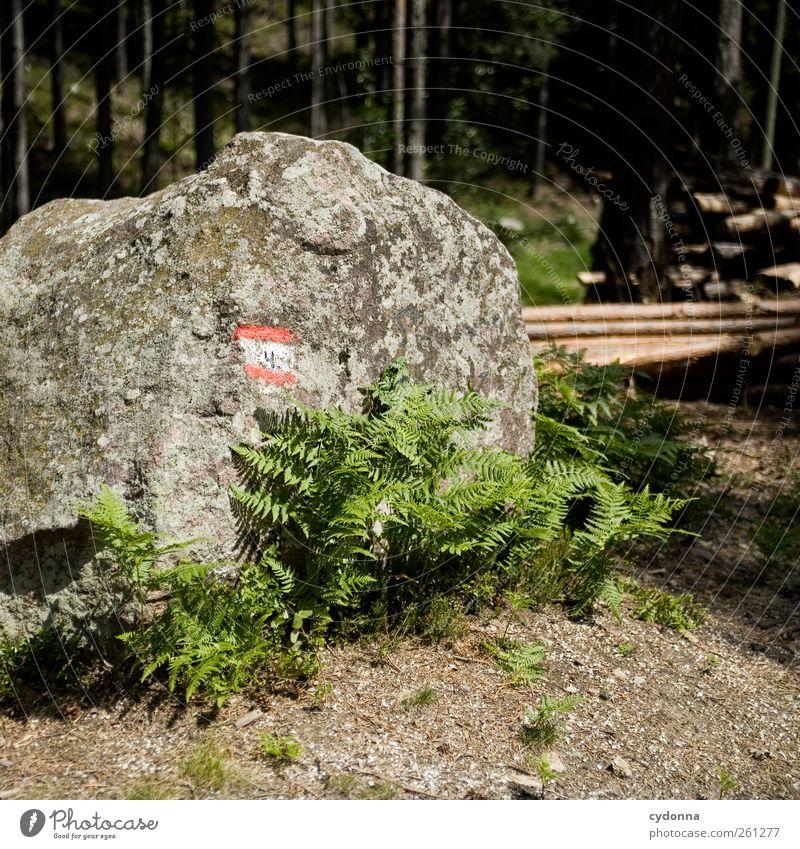 Da lang! Wohlgefühl ruhig Ferien & Urlaub & Reisen Ausflug Abenteuer wandern Umwelt Natur Sommer Farn Wald Felsen Zeichen Schilder & Markierungen Einsamkeit