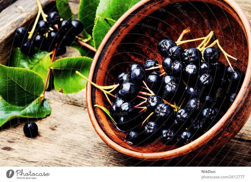 Aroniabeere mit Blatt Frucht Beeren Natur Ast Pflanze reif frisch natürlich organisch Gesundheit roh Ernte Menschengruppe Haufen Herbst Diät aronia melanocarpa