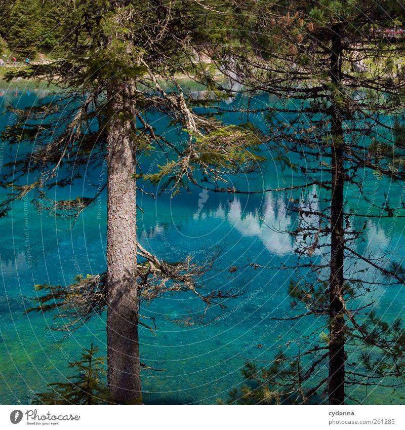 Blaues Wunder Natur Ferien & Urlaub & Reisen blau schön Sommer Wasser Baum Landschaft ruhig Wald Umwelt außergewöhnlich See Tourismus Idylle ästhetisch