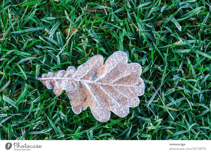 Mit Frost bedecktes Blatt Natur Pflanze Herbst Wetter Baum Gras Park Wald Farbe Rumänien Timisoara kalt Kristalle Eis Jahreszeiten Frühling Konsistenz Farbfoto