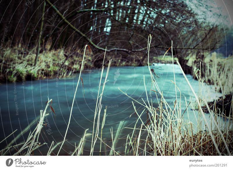 120# Natur Wasser Pflanze Winter Umwelt Herbst Landschaft Klima Ziel Bach fließen Klimawandel
