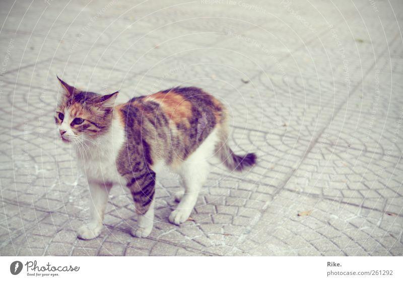 Eine Glückskatze. Katze schön Tier Einsamkeit ruhig Straße Freiheit klein Glück Stein wild laufen frei Abenteuer außergewöhnlich niedlich