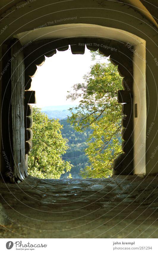 Erhellend Natur grün Blatt Wald Wand Mauer grau Horizont frisch Idylle Fröhlichkeit Lebensfreude Schutz Sicherheit historisch Hügel