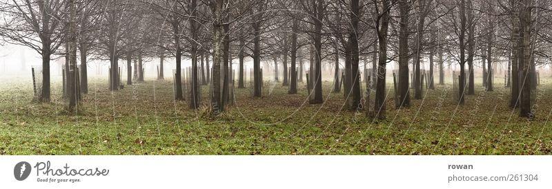 baumstreifen Umwelt Natur Landschaft Herbst Winter Nebel Pflanze Baum Gras Blatt Garten Park Wiese Wald dunkel kalt grün Streifen Panorama (Bildformat)