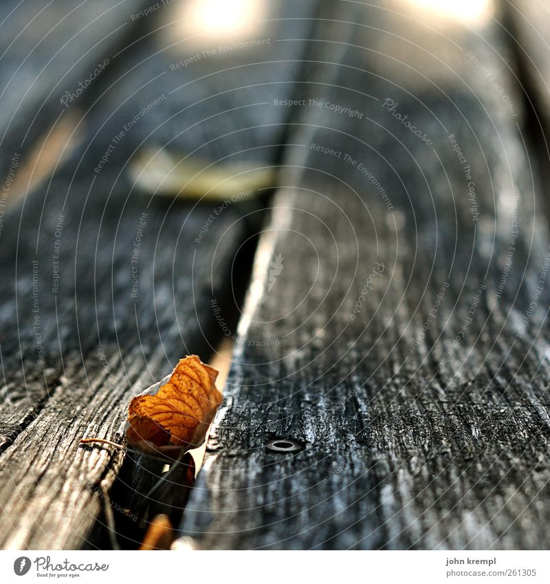 Auf dem Holzweg Blatt Tisch verblüht dehydrieren alt dreckig braun grau Traurigkeit Vergänglichkeit Wandel & Veränderung Herbstlaub herbstlich Holztisch