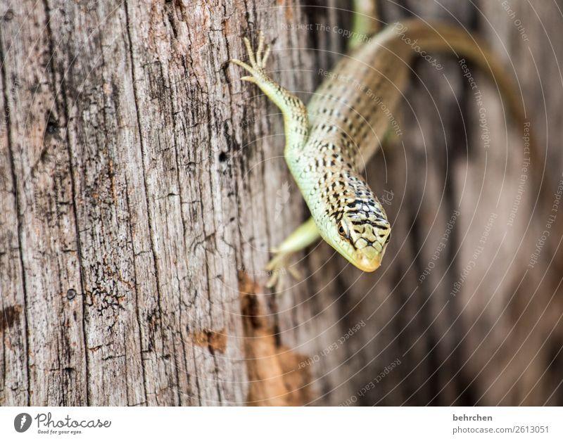 festgeklebt Ferien & Urlaub & Reisen Tourismus Ausflug Abenteuer Ferne Freiheit Urwald Strand Wildtier Tiergesicht Schuppen Gecko Echte Eidechsen Reptil 1