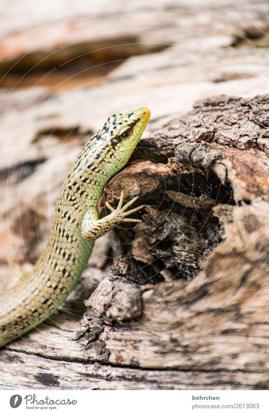 wenn der kopf zu schwer wird schön Baum Erholung Tier außergewöhnlich Wildtier fantastisch beobachten festhalten Baumstamm Asien exotisch Tiergesicht Reptil