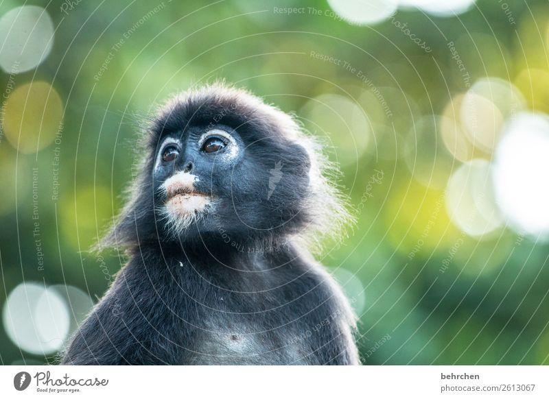 verträumt Ferien & Urlaub & Reisen Natur schön Tier Ferne Auge Tourismus außergewöhnlich Freiheit Ausflug Wildtier Abenteuer fantastisch niedlich Asien Fell