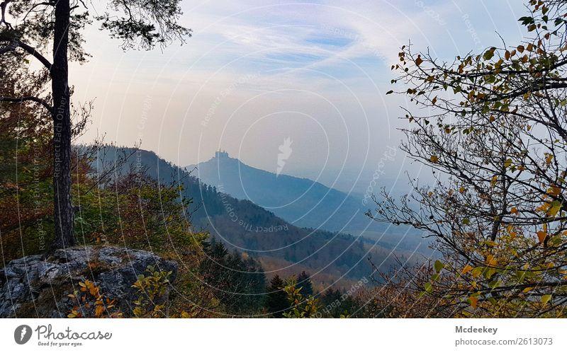Burg Hohenzollern I Umwelt Natur Landschaft Pflanze Herbst Schönes Wetter Nebel Baum Gras Sträucher Blatt Wald Bisingen Burg oder Schloss Bauwerk Gebäude