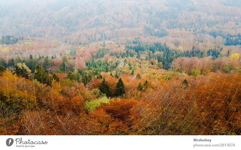 Schwäbische Alb II Umwelt Natur Landschaft Pflanze Herbst Schönes Wetter Nebel Baum Sträucher Blatt Grünpflanze Wildpflanze Wald frisch gigantisch Unendlichkeit