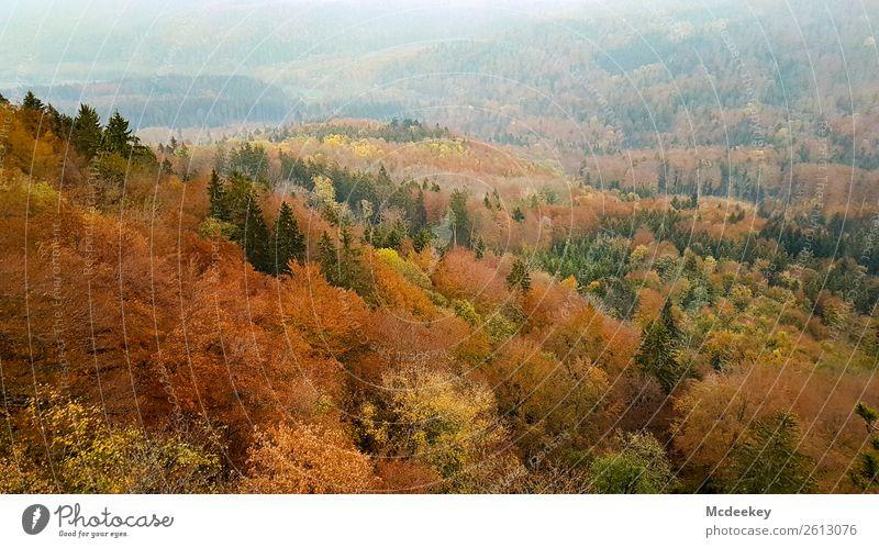 Schwäbische Alb I Umwelt Natur Landschaft Pflanze Herbst Schönes Wetter Nebel Baum Sträucher Blatt Grünpflanze Wildpflanze Wald frisch gigantisch Unendlichkeit