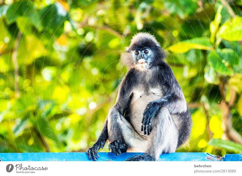 lässiges wochenende! Ferien & Urlaub & Reisen schön Erholung Tier Ferne Tourismus außergewöhnlich Freiheit Ausflug Wildtier sitzen Abenteuer fantastisch