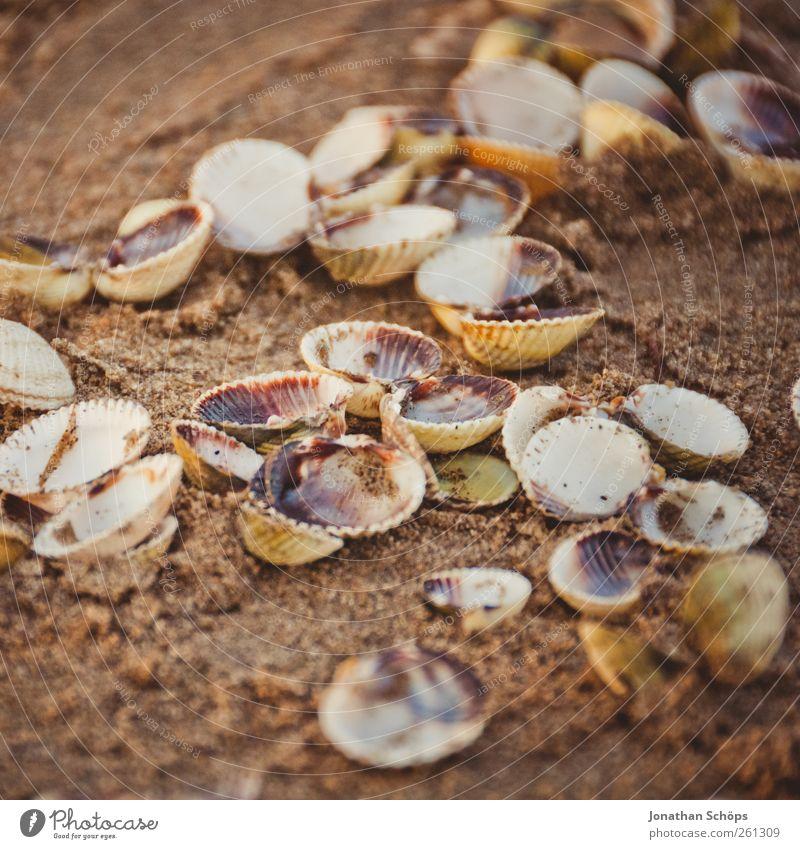 Muschelansammlung Natur Ferien & Urlaub & Reisen Sommer Meer Strand ruhig Ferne gelb Erholung Umwelt Wärme Sand braun gold Ausflug mehrere