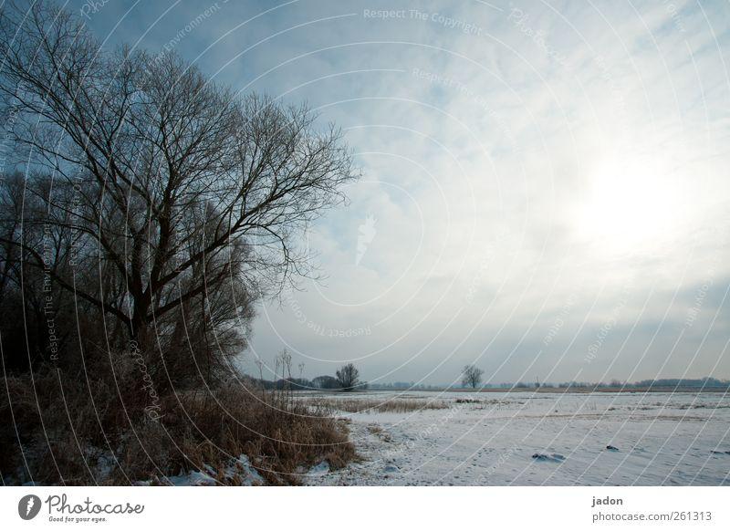 winterblues. Himmel Baum Winter Wolken ruhig kalt Landschaft Schnee grau Traurigkeit Eis Feld trist Sträucher Frost Sehnsucht