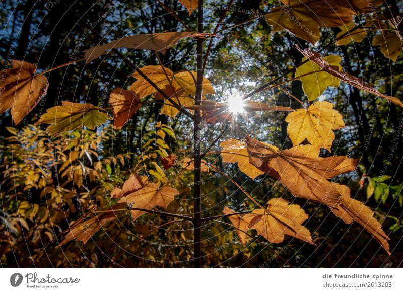 Herbststrauch Umwelt Natur Tier Himmel Sonne Sonnenlicht Klima Wetter Schönes Wetter Pflanze Baum Gras Sträucher Blatt Grünpflanze Wildpflanze Wald Berlin