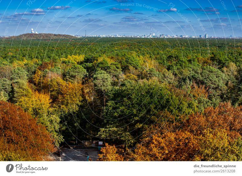 Herbst im Grunewald III Umwelt Natur Landschaft Pflanze Himmel Sonne Sonnenlicht Klima Schönes Wetter Baum Wald Berlin Deutschland Europa Hauptstadt Stadtrand