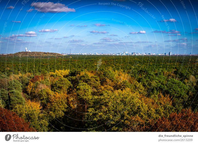 Herbst im Grunewald II Umwelt Natur Landschaft Pflanze Himmel Sonne Klima Wetter Schönes Wetter Baum Wald Berge u. Gebirge Karlsberg Teufelsberg Berlin