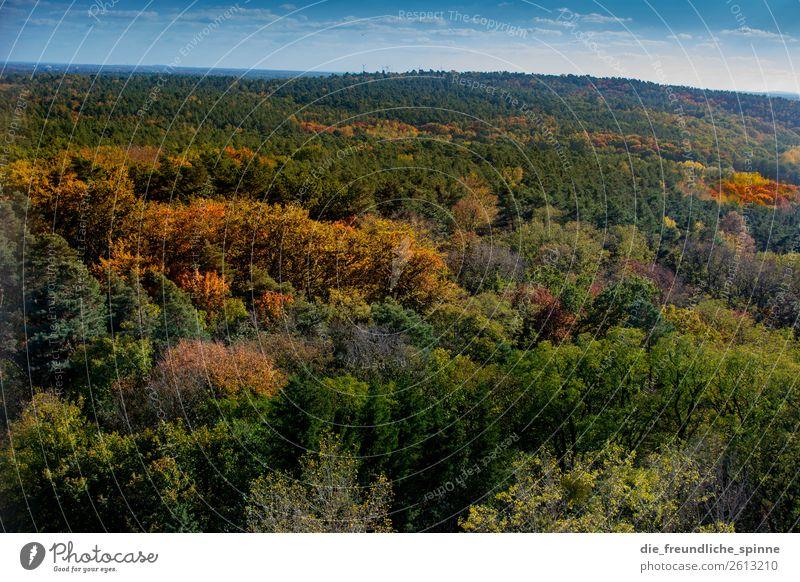Herbst im Grunewald Himmel Natur Pflanze grün Landschaft Sonne Baum Wolken Wald Ferne Berge u. Gebirge gelb Umwelt Berlin Deutschland