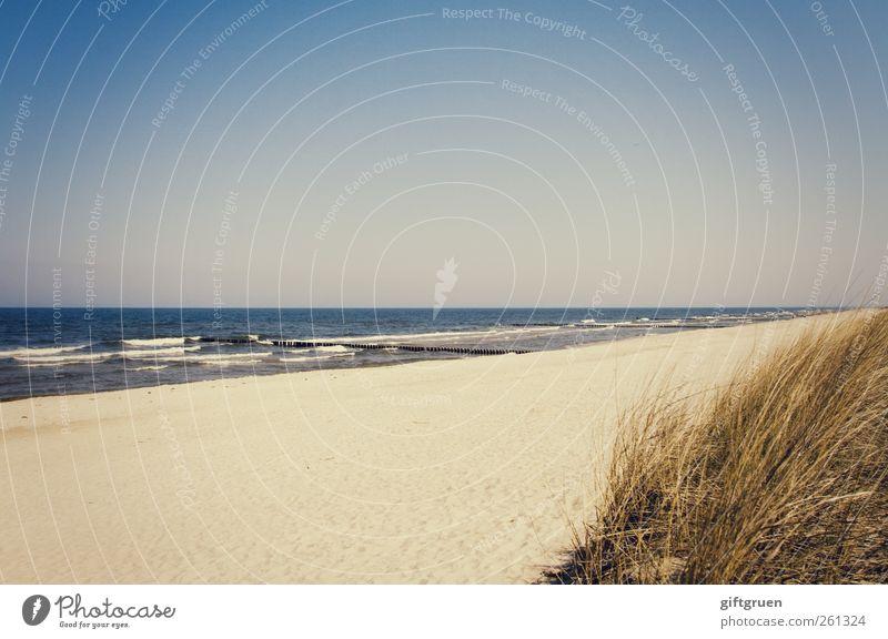 am strand Umwelt Natur Landschaft Pflanze Urelemente Sand Wasser Himmel Wolkenloser Himmel Sommer Schönes Wetter Wellen Küste Strand Ostsee Meer natürlich blau