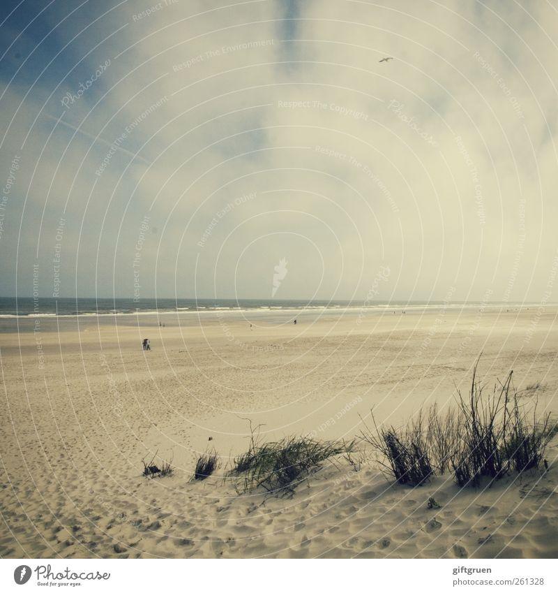 strandspaziergang Umwelt Natur Landschaft Pflanze Urelemente Sand Wasser Himmel Wolken Wetter Gras Wellen Küste Strand Ostsee Meer ästhetisch Spaziergang Düne