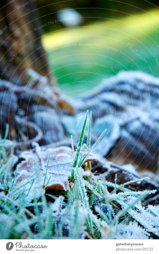 Kalter Schauer Gras Park Winter Herbst weiß Blatt kalt Baum Holz Licht Unschärfe Rasen Frost Schatten Bodenbelag