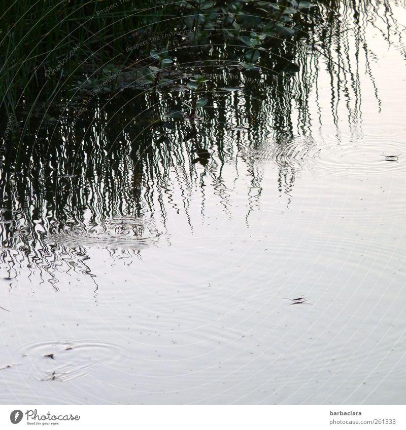 Das Reich der Wasserläufer Natur Gras Sträucher Seeufer Tier Insekt Linie Kreis Wasserspiegelung Bewegung laufen Schwimmen & Baden nass blau grau schwarz