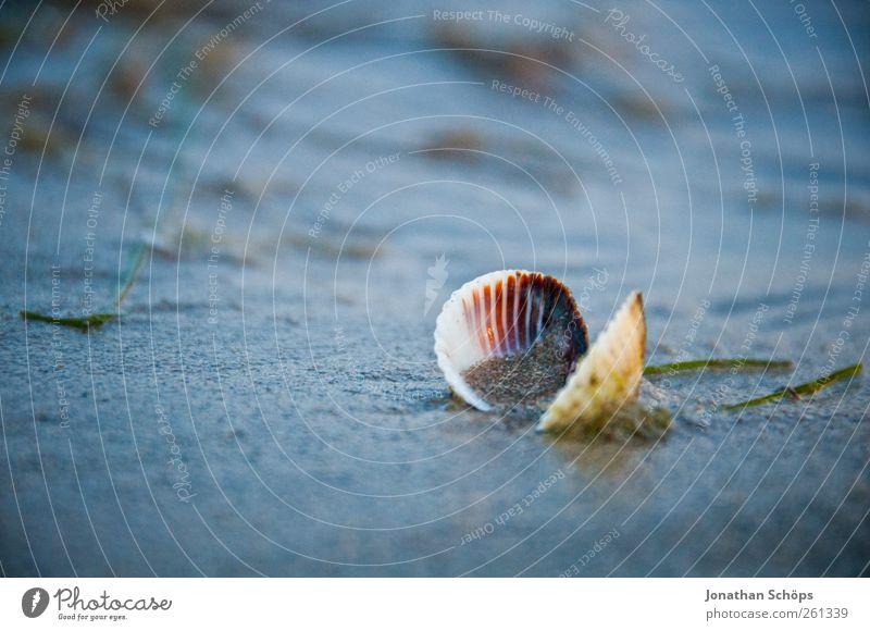 Blaue Stunde [einsame Muschel] Ferne Sommer Sommerurlaub Meer Insel blau Muschelschale Dämmerung kalt Abendsonne Detailaufnahme Strandspaziergang 1