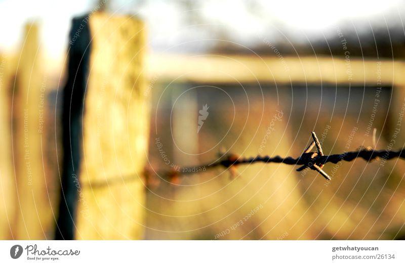 Auf Draht schön Himmel Sonne Herbst Wiese Holz Wärme Sträucher nah Physik Hügel Weide Zaun Holzbrett Stacheldraht