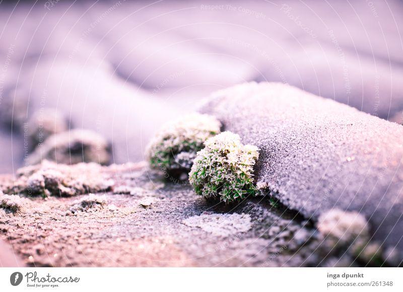 Eisdach Urelemente Wasser Winter Klima Klimawandel Frost Pflanze Moos Wildpflanze Flechten Menschenleer Haus Einfamilienhaus Bauwerk Gebäude Dach Dachziegel