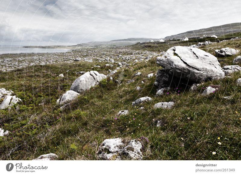 Wo die Steine wachsen Pflanze Gras Wiese Feld Hügel Felsen Berge u. Gebirge Küste Meer Atlantik Fanore Republik Irland liegen alt gigantisch groß steinig