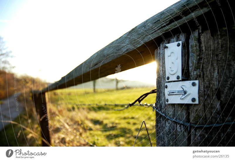 An die Latte Zaun Stacheldraht Licht schön Physik Wiese Hügel Unschärfe nah Sträucher Holzbrett Herbst Sonne Abend Wärme Weide Himmel Straße Wege & Pfade