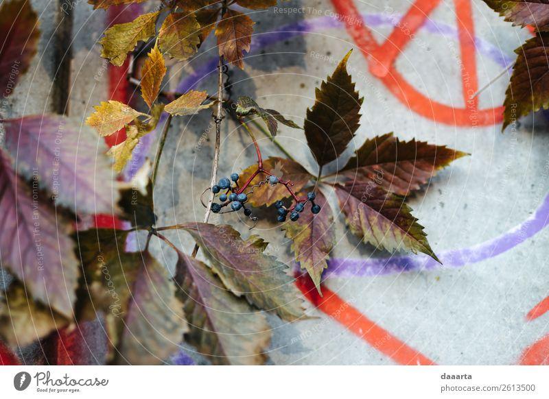 Herbstmauer Lifestyle Stil Design Leben harmonisch Freizeit & Hobby Spielen Abenteuer Freiheit Sightseeing Natur Pflanze Schönes Wetter Blatt Beeren Garten Park