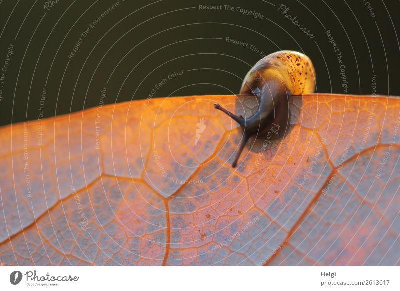 endlich im Rampenlicht! Natur Pflanze Tier Blatt schwarz Tierjunges Herbst gelb Umwelt natürlich klein außergewöhnlich orange braun grau Park