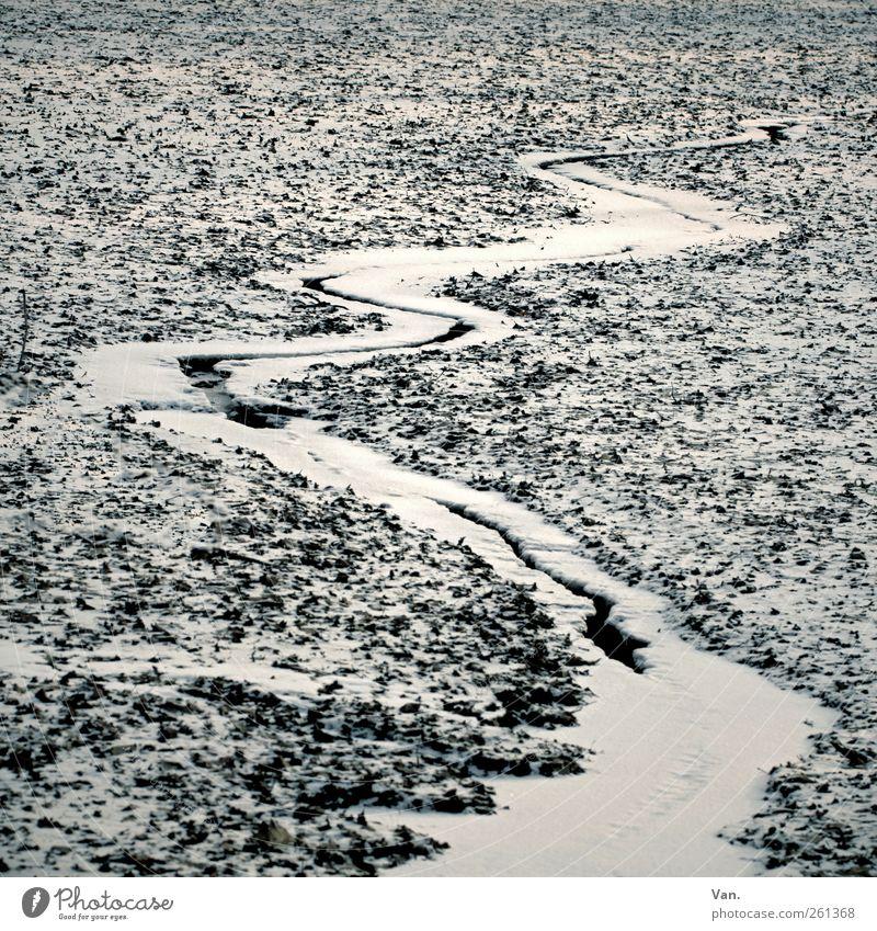 Winter Umwelt Natur Erde Wasser Eis Frost Schnee Teich Bach kalt weiß fließen gefroren Wasserrinne Zickzack Schlangenlinie Farbfoto Gedeckte Farben