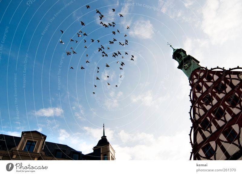 Ausschwärmen Umwelt Tier Himmel Wolken Sonnenlicht Schönes Wetter Haus Bauwerk Gebäude Fachwerkhaus Fachwerkfassade Fassade Fenster Uhrenturm Turm Wildtier