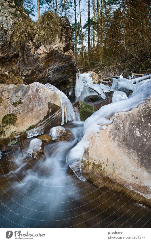-16° Natur Wasser Wald kalt Landschaft Eis Felsen Frost Bach