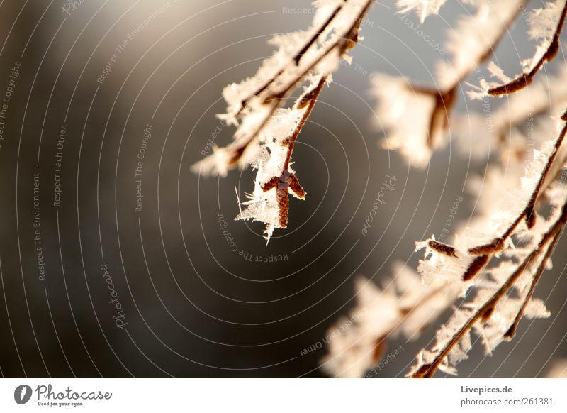 Othal`s finest 4 Natur weiß schön Baum Ferien & Urlaub & Reisen Pflanze Winter kalt Schnee Berge u. Gebirge grau braun Eis gold Ausflug Ast