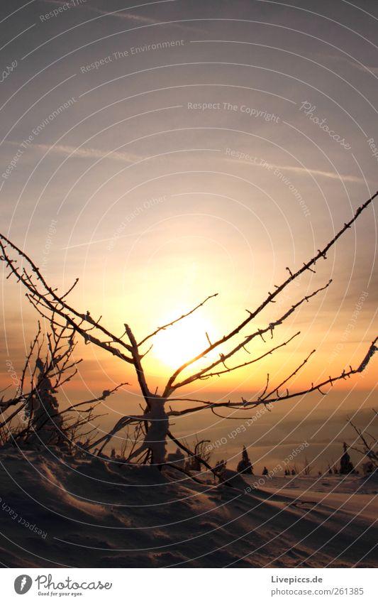 Othal`s finest 5 Natur Ferien & Urlaub & Reisen Pflanze Winter kalt Landschaft Schnee Berge u. Gebirge Ausflug außergewöhnlich Sträucher stachelig Winterurlaub
